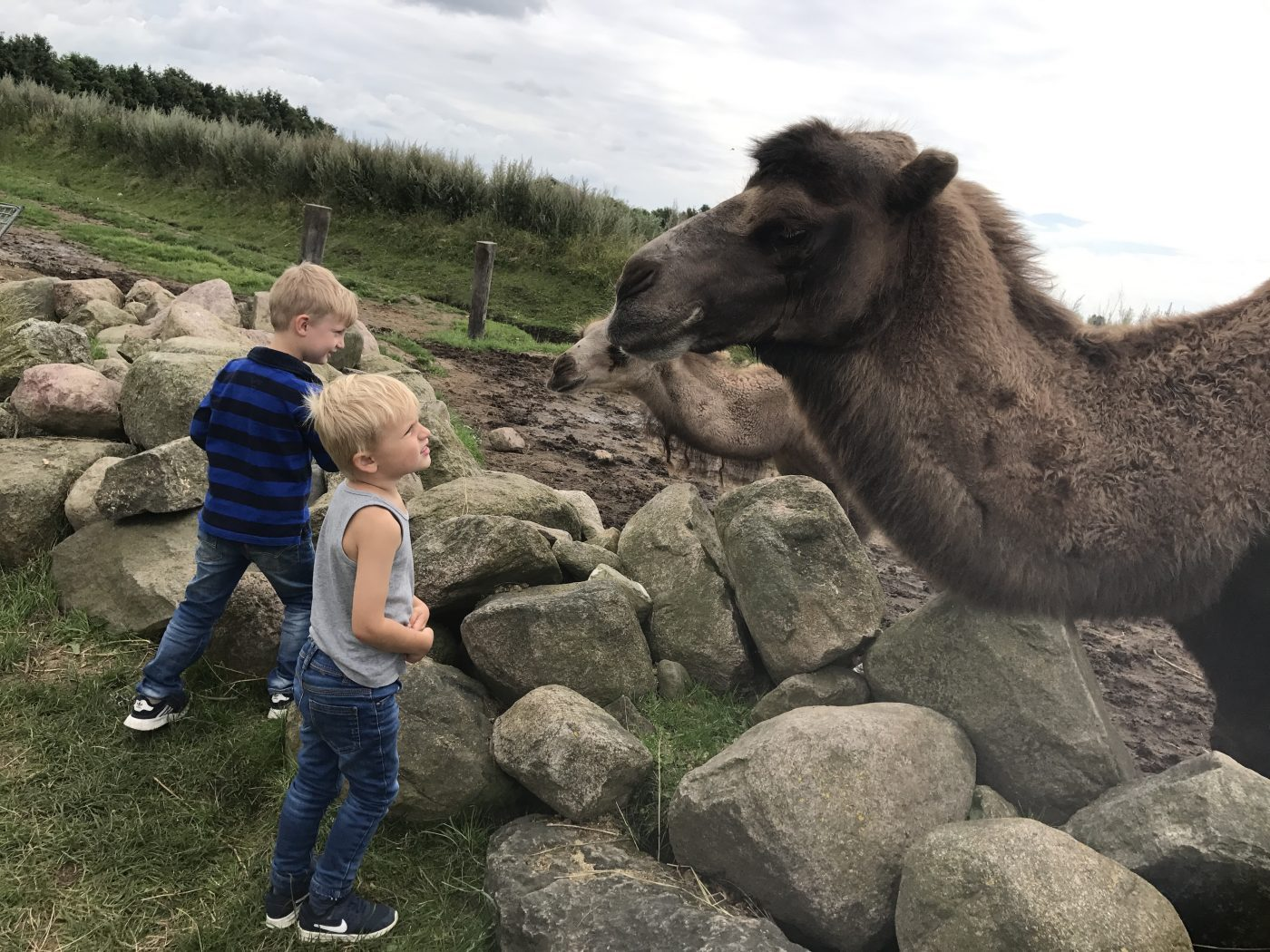 zoopark kamel