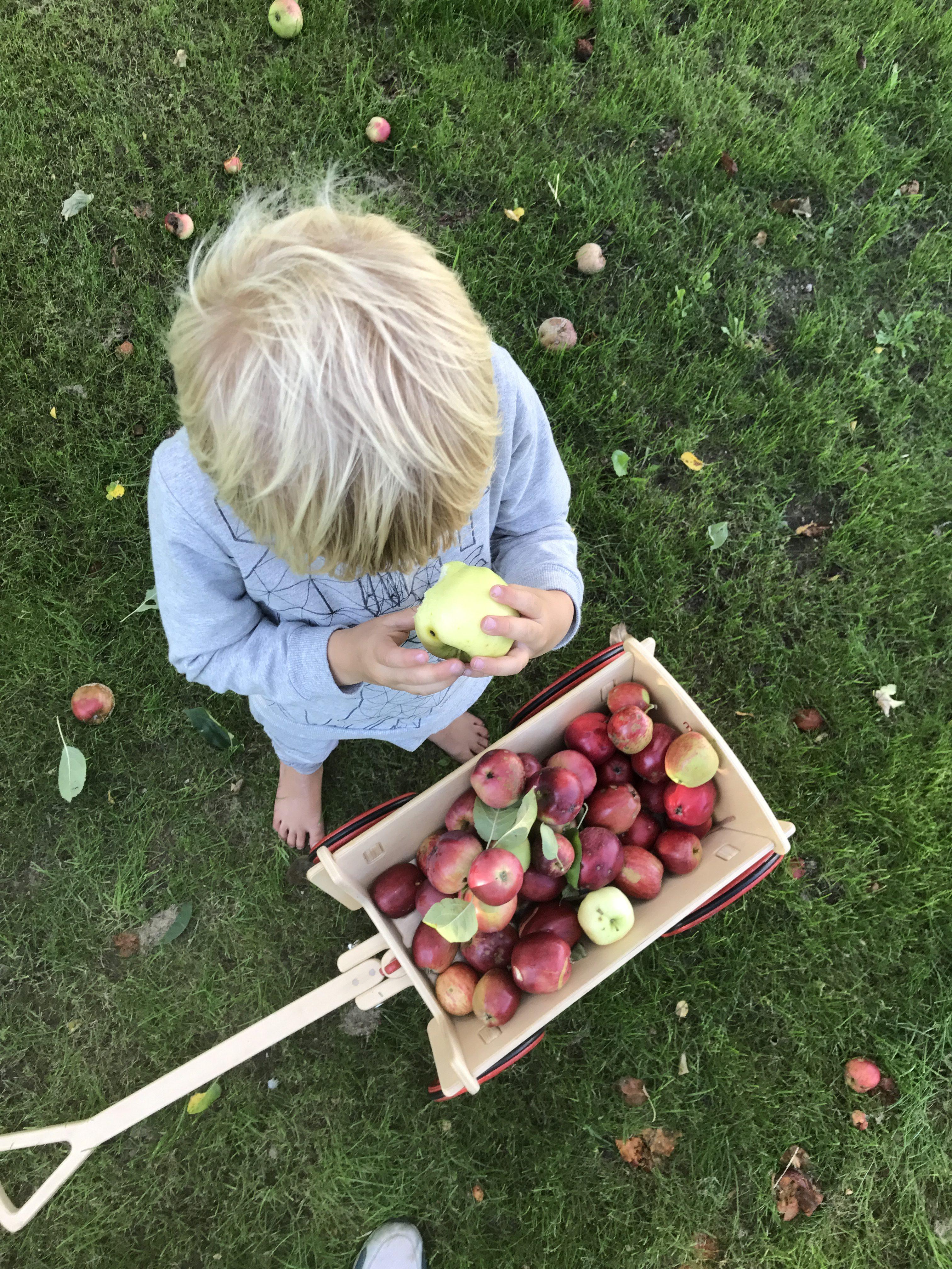 æblerov æblemost