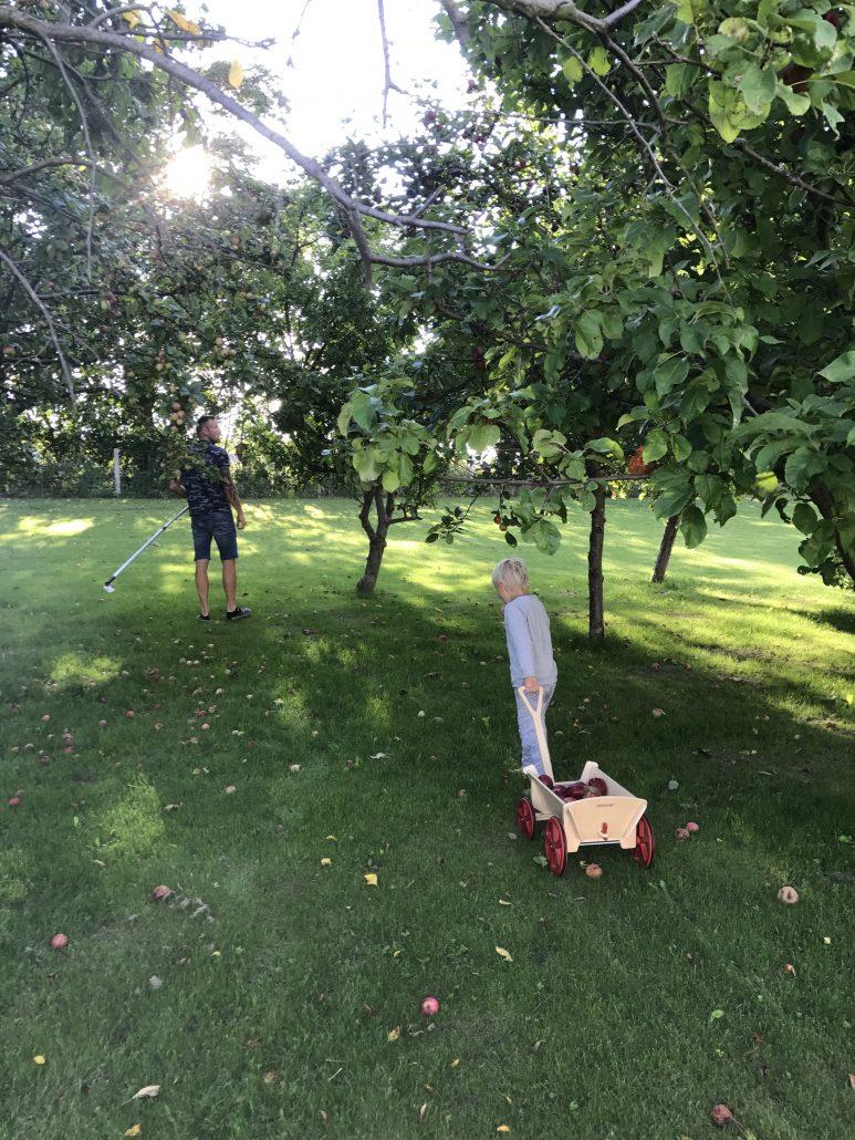 æbletræer æblemost