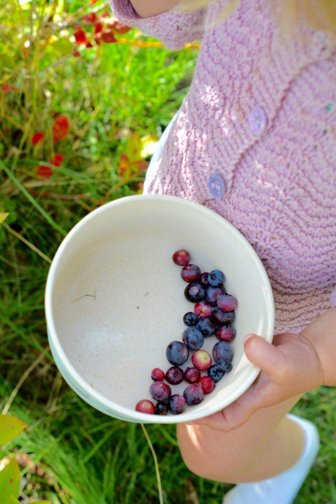 sommer blåbær1