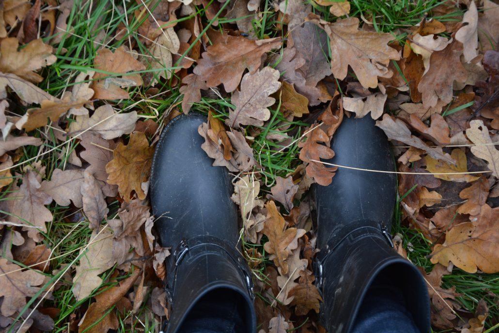 efterår skovtur blade