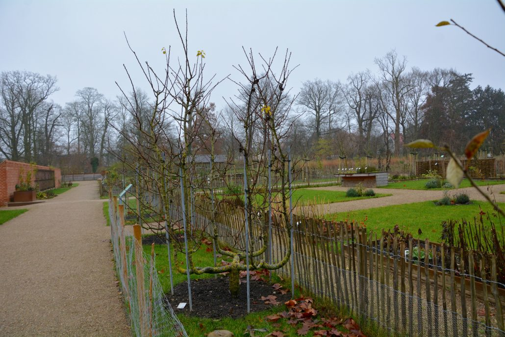 eutin æbletræer einsmuttur