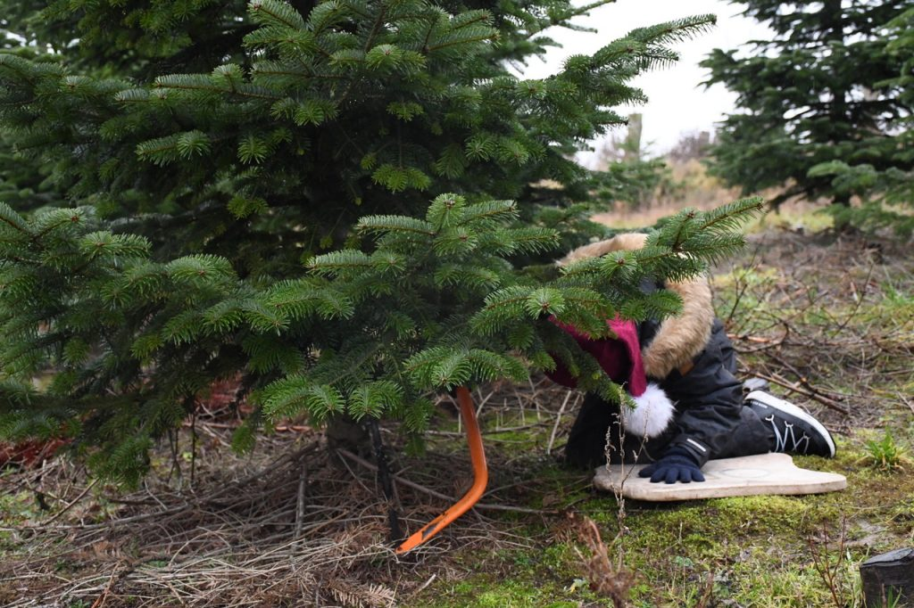 3. søndag æbleskriver og juletræ 2