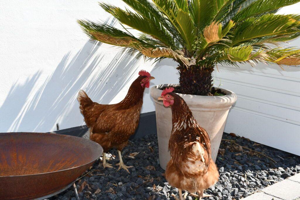 anchers havecenter terrasse beplantning 9