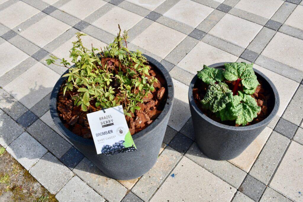 anchers havecenter terrasse beplantning 1