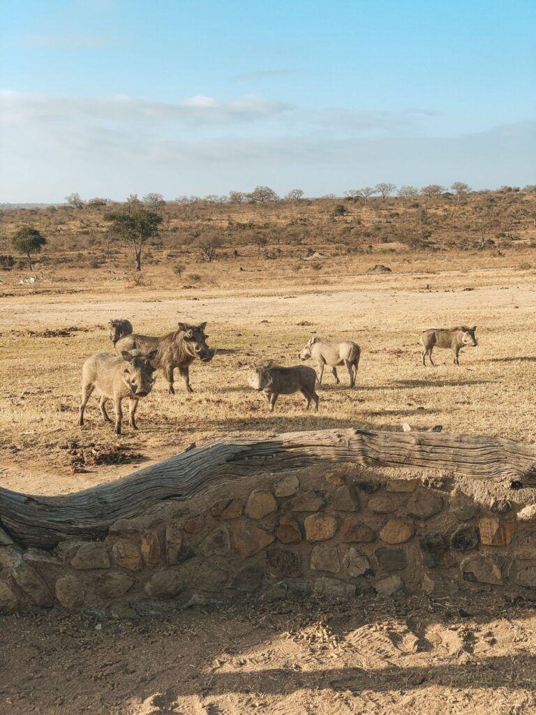 Afrika rejse sydafrika 19