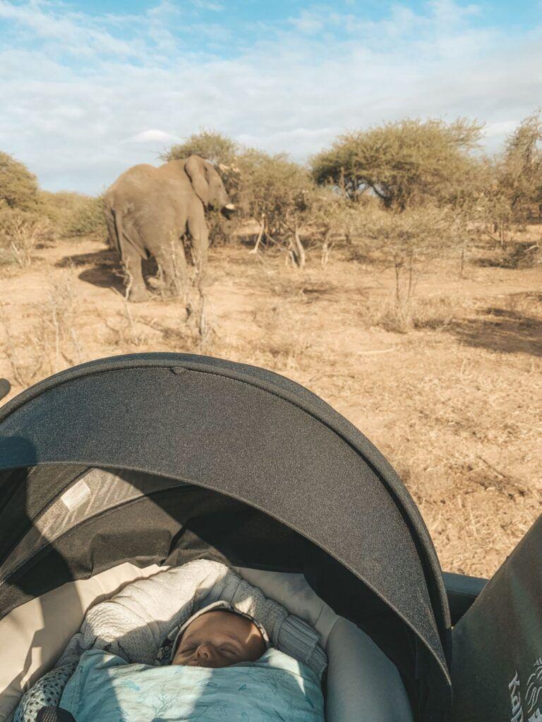 Afrika rejse sydafrika 20