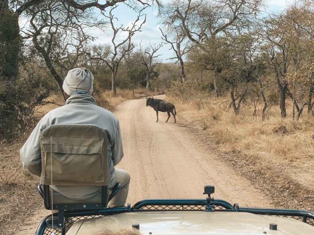 Afrika rejse sydafrika 21