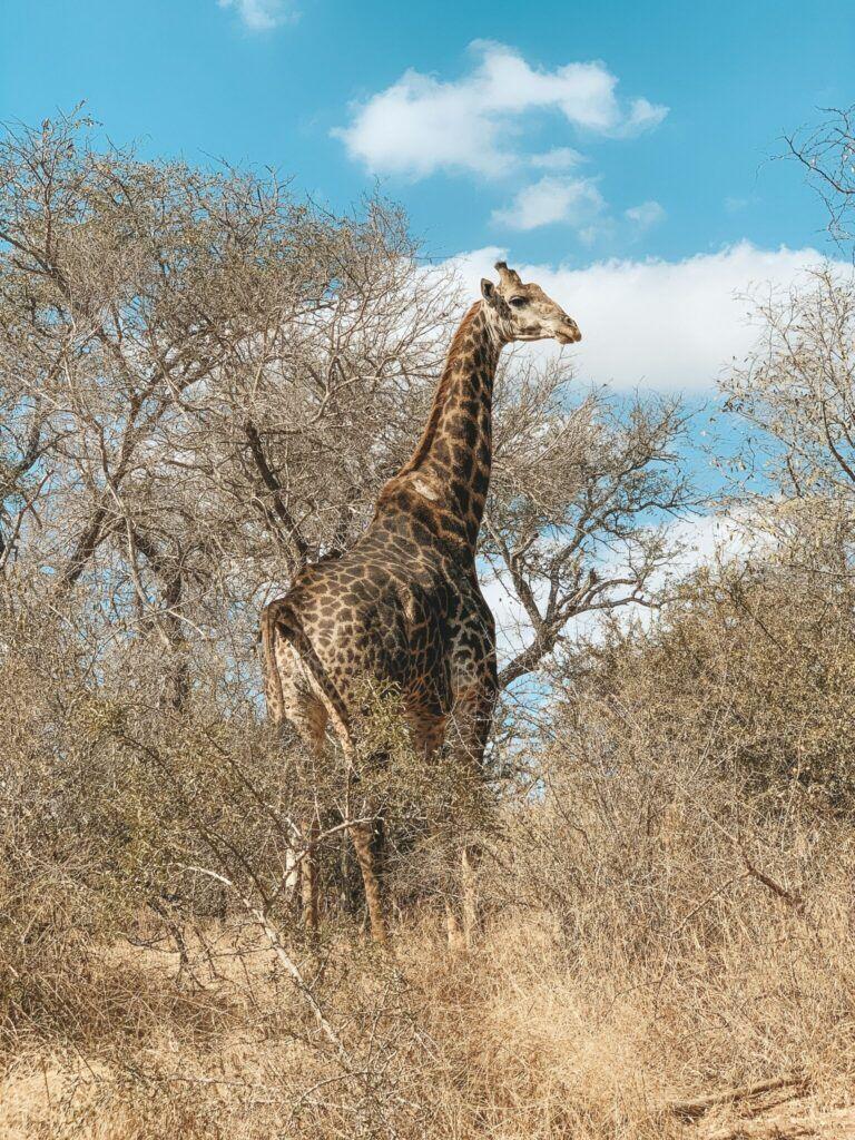 Afrika rejse sydafrika 1