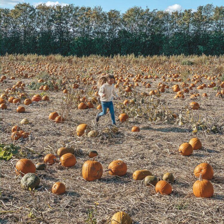 efterår, græskar, halloween 7