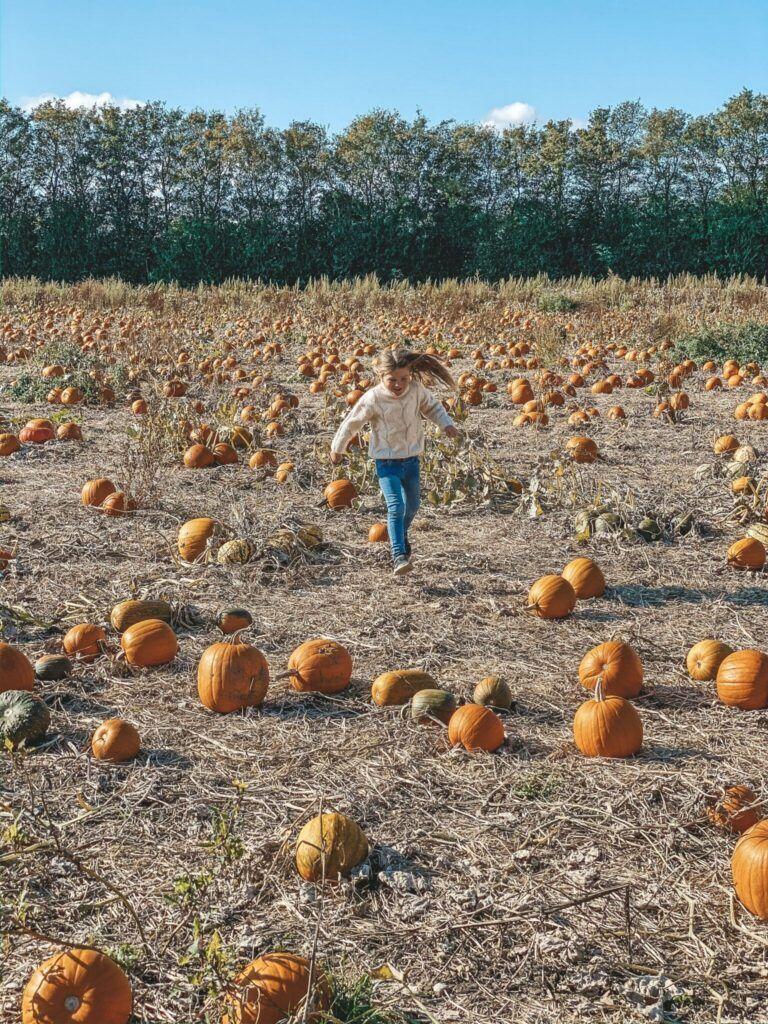 efterår, græskar, halloween 6