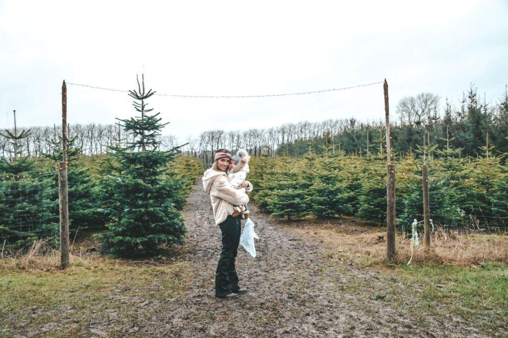 juletræ, jul, årets juletræ