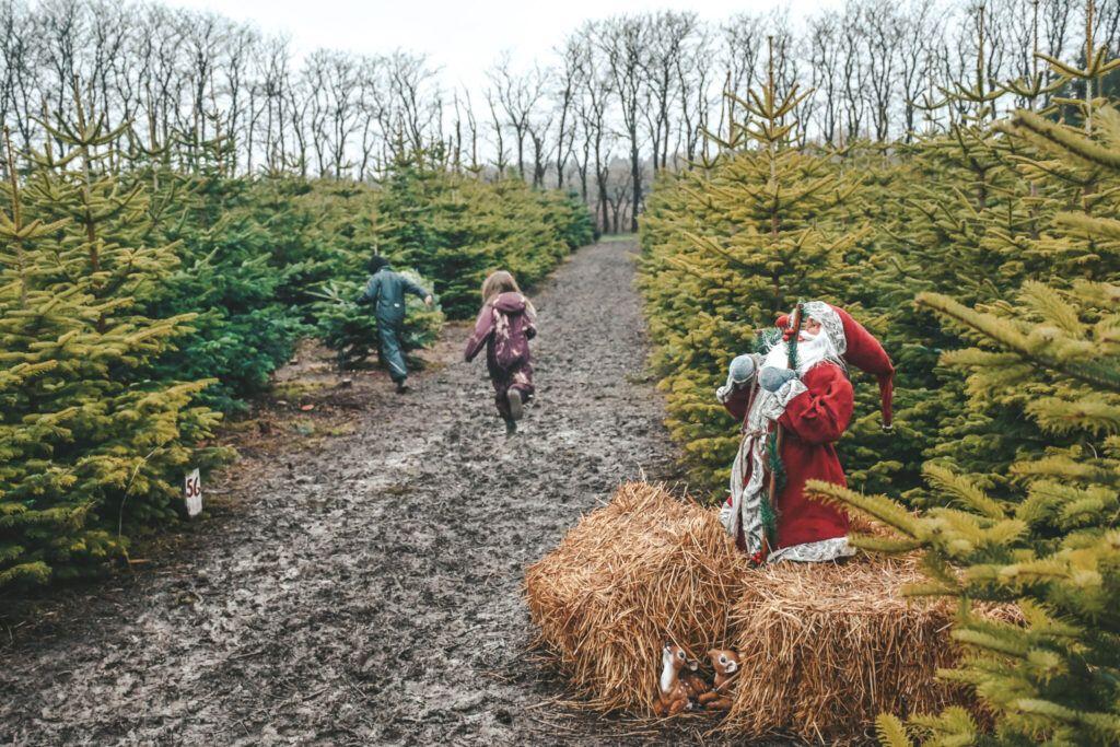 juletræ, jul, årets juletræ 5