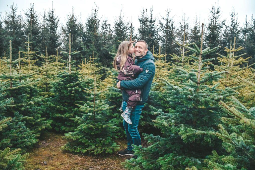 juletræ, jul, årets juletræ 6