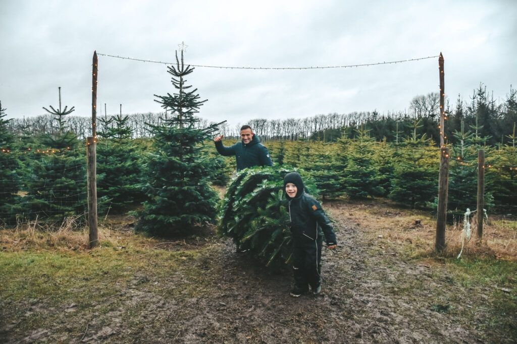 juletræ, jul, årets juletræ 8