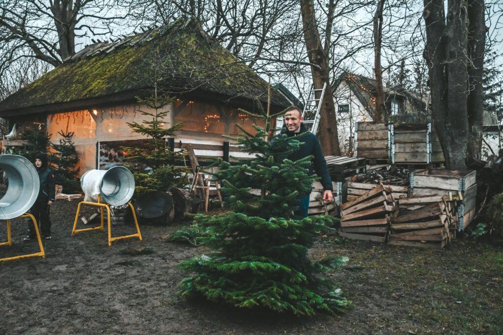 juletræ, jul, årets juletræ 9
